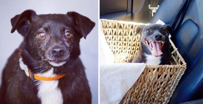 16 φωτογραφίες ζώων πριν και μετά την διάσωση που θα σας φτιάξουν την μέρα (10)