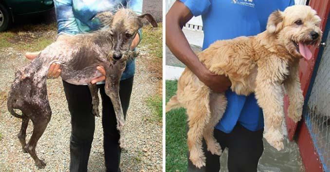 16 φωτογραφίες ζώων πριν και μετά την διάσωση που θα σας φτιάξουν την μέρα (13)