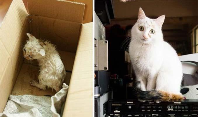 16 φωτογραφίες ζώων πριν και μετά την διάσωση που θα σας φτιάξουν την μέρα (14)