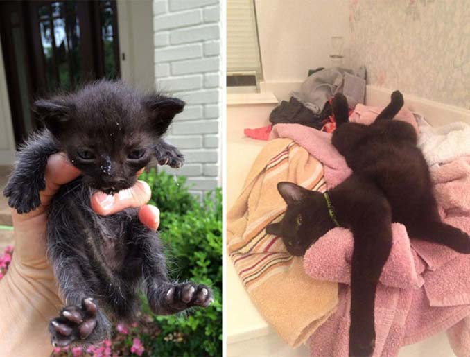 16 φωτογραφίες ζώων πριν και μετά την διάσωση που θα σας φτιάξουν την μέρα (15)