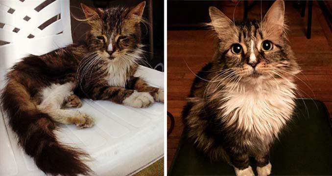 16 φωτογραφίες ζώων πριν και μετά την διάσωση που θα σας φτιάξουν την μέρα (16)