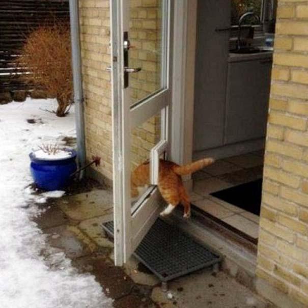 Γάτες που... κάνουν τα δικά τους! #33 (3)