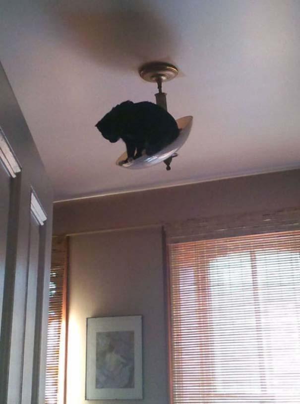 Γάτες που... κάνουν τα δικά τους! #33 (4)