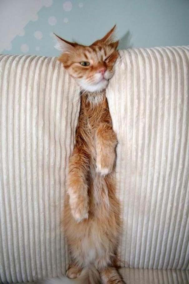 Γάτες που... κάνουν τα δικά τους! #33 (7)