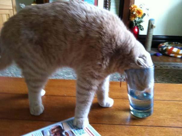 Γάτες που... κάνουν τα δικά τους! #33 (8)