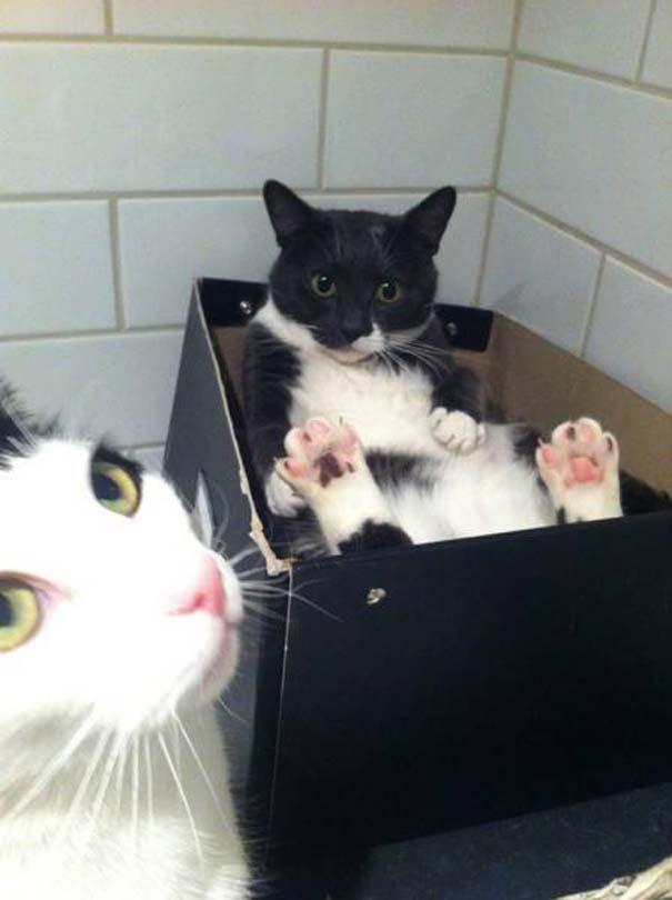Γάτες που... κάνουν τα δικά τους! #33 (10)