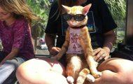 Γάτες που... κάνουν τα δικά τους! #34 (9)
