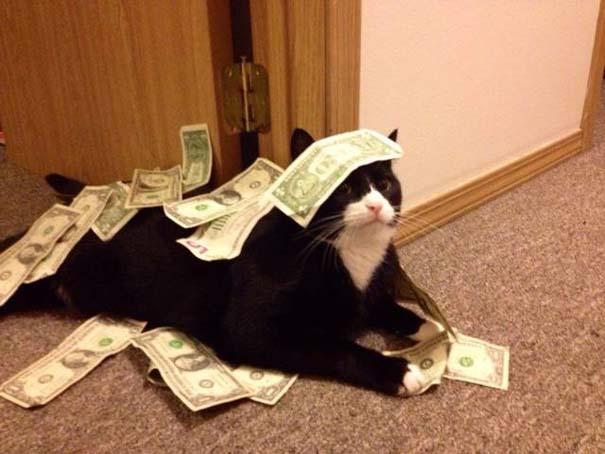 Γάτες που... κάνουν τα δικά τους! #35 (2)