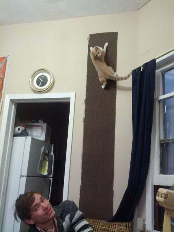 Γάτες που... κάνουν τα δικά τους! #35 (5)