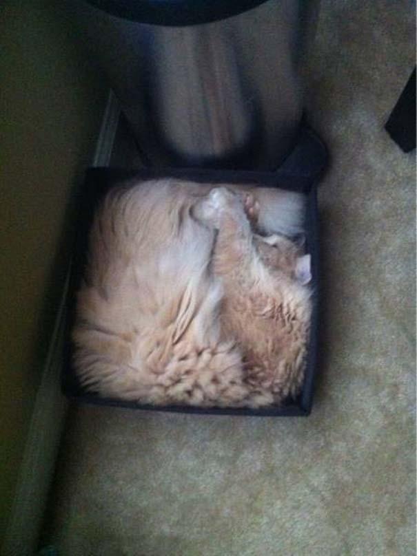 Γάτες που... κάνουν τα δικά τους! #35 (6)