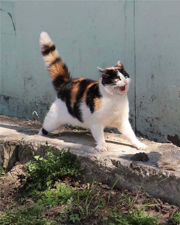 Γάτες που... κάνουν τα δικά τους! #35 (7)