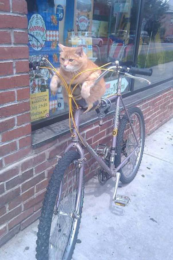 Γάτες που... κάνουν τα δικά τους! #35 (9)