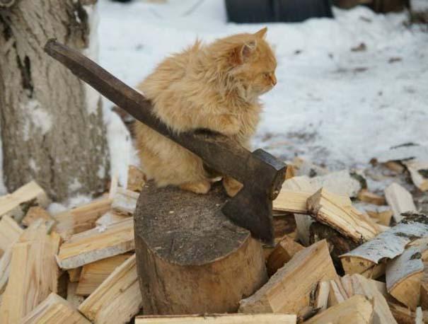 Γάτες που... κάνουν τα δικά τους! #35 (11)