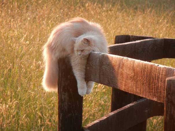 Γάτες που... κάνουν τα δικά τους! #36 (2)