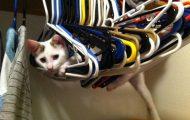 Γάτες που... κάνουν τα δικά τους! #36 (4)