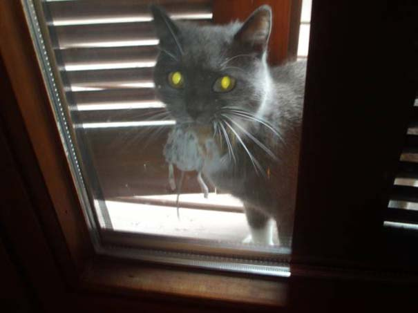 Γάτες που... κάνουν τα δικά τους! #36 (6)