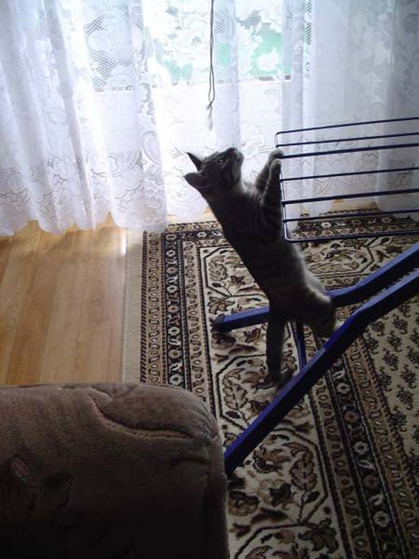 Γάτες που... κάνουν τα δικά τους! #36 (7)