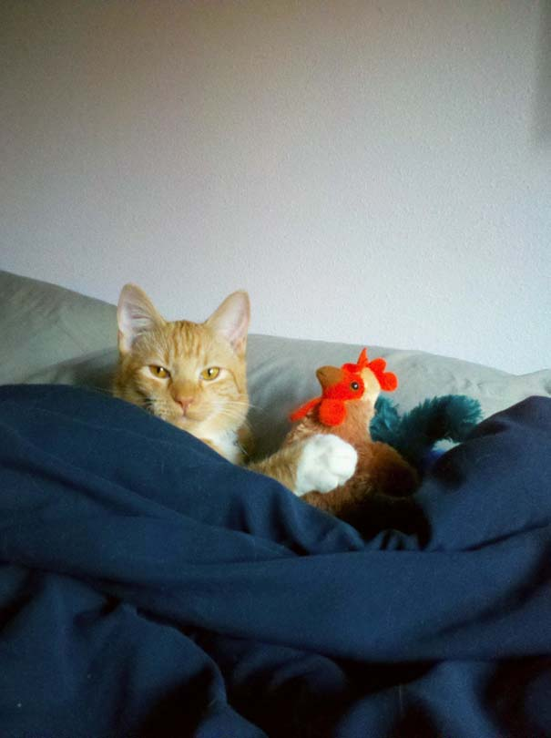 Γάτες που... κάνουν τα δικά τους! #36 (11)