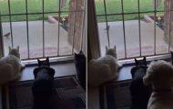 Γάτες πήραν την τρομάρα της ζωής τους