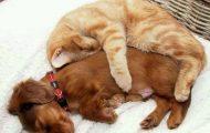 Γάτες που ερωτεύτηκαν σκύλους (1)