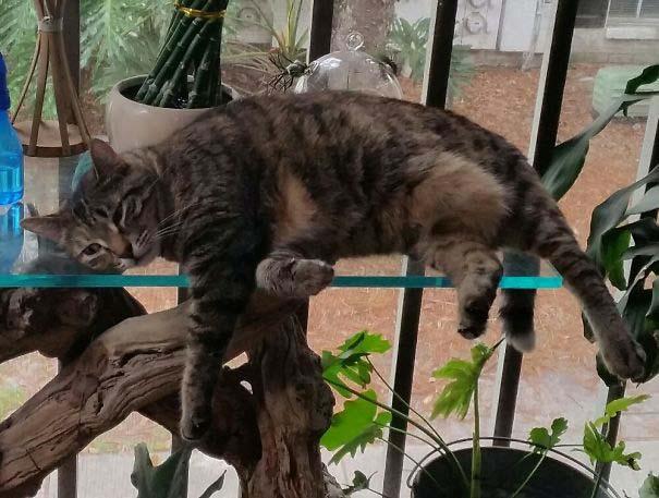 Γάτες που κοιμούνται στα πιο απίθανα μέρη (1)