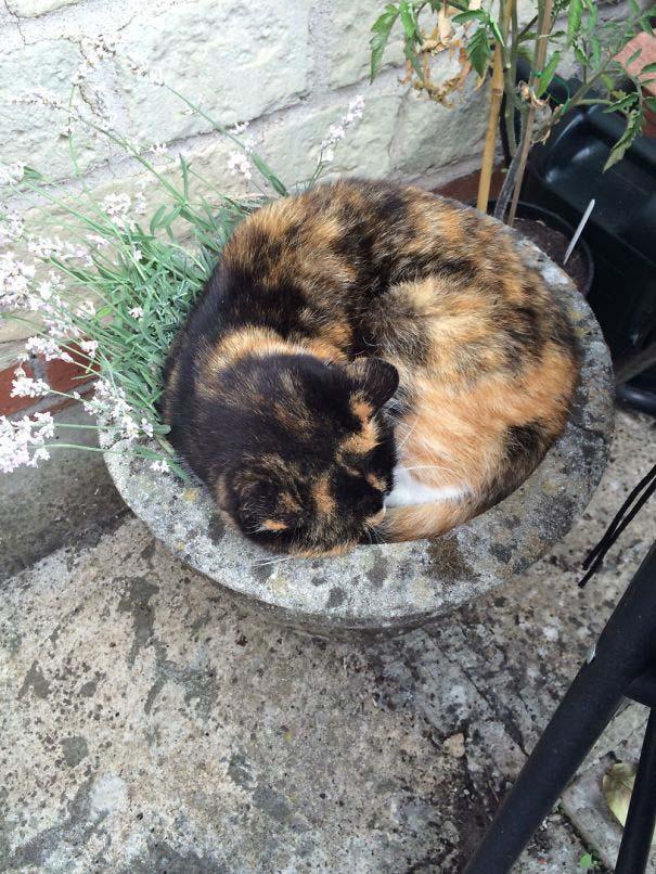 Γάτες που κοιμούνται στα πιο απίθανα μέρη (3)