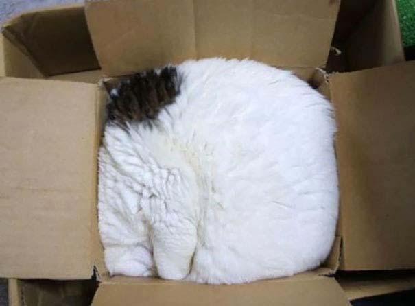 Γάτες που κοιμούνται στα πιο απίθανα μέρη (4)