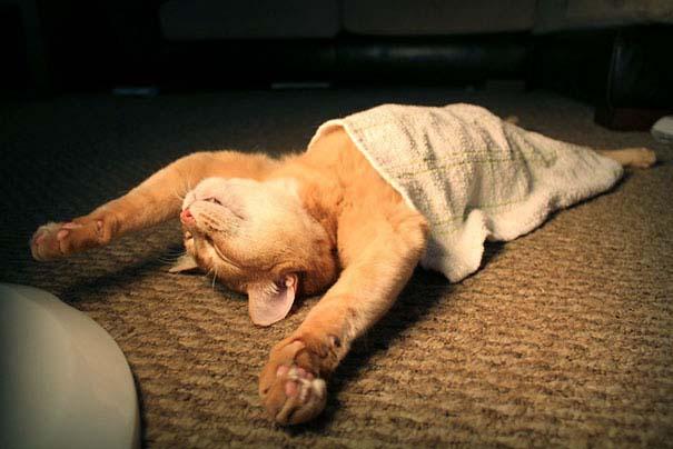 Γάτες που κοιμούνται στα πιο απίθανα μέρη (5)