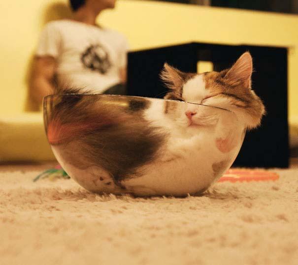 Γάτες που κοιμούνται στα πιο απίθανα μέρη (7)