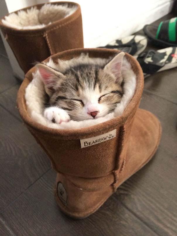 Γάτες που κοιμούνται στα πιο απίθανα μέρη (8)