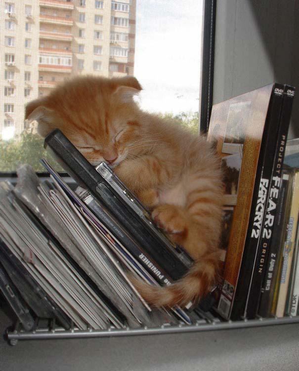 Γάτες που κοιμούνται στα πιο απίθανα μέρη (9)