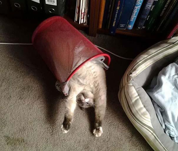 Γάτες που κοιμούνται στα πιο απίθανα μέρη (15)
