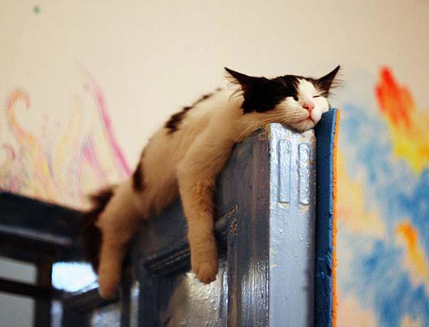 Γάτες που κοιμούνται στα πιο απίθανα μέρη (16)