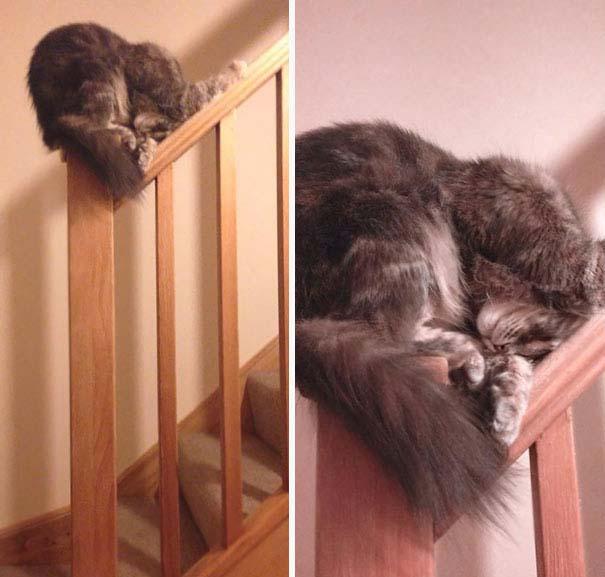 Γάτες που κοιμούνται στα πιο απίθανα μέρη (17)