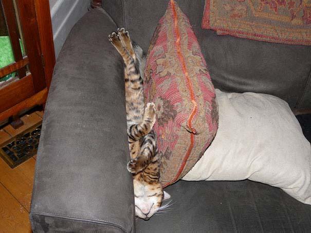 Γάτες που κοιμούνται στα πιο απίθανα μέρη (18)