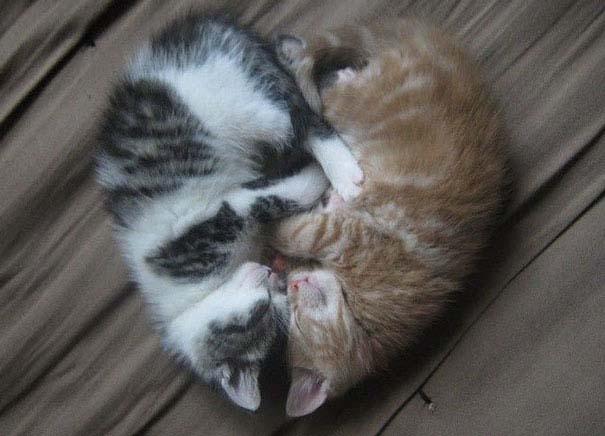 Γάτες που κοιμούνται στα πιο απίθανα μέρη (22)