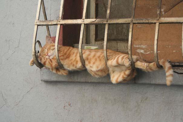 Γάτες που κοιμούνται στα πιο απίθανα μέρη (24)