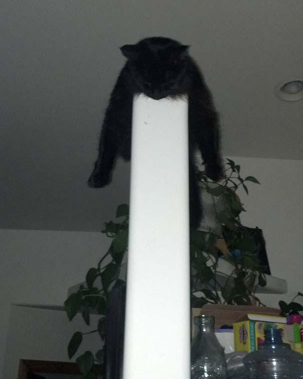 Γάτες που κοιμούνται στα πιο απίθανα μέρη (32)