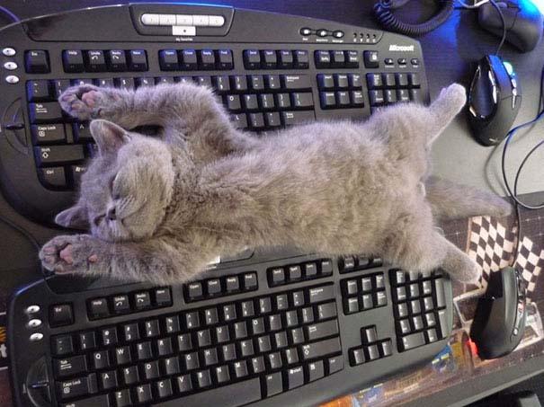 Γάτες που κοιμούνται στα πιο απίθανα μέρη (33)