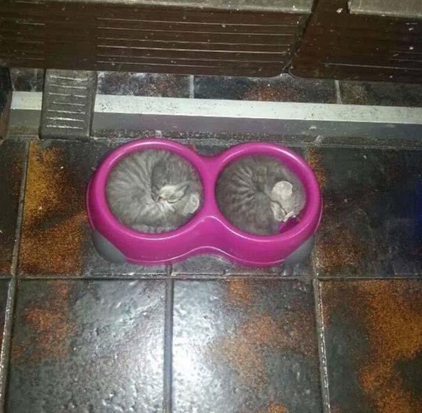 Γάτες που κοιμούνται στα πιο απίθανα μέρη (34)