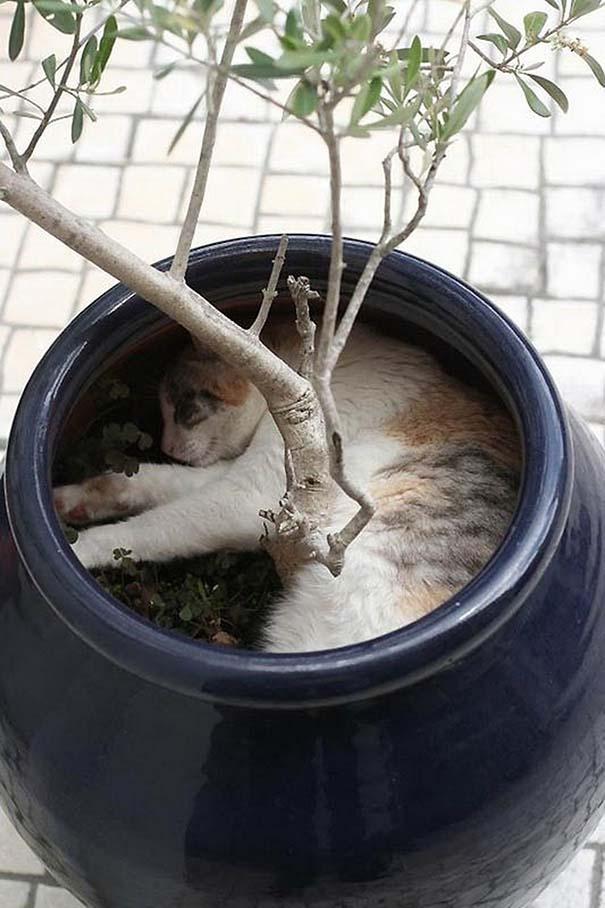 Γάτες που κοιμούνται στα πιο απίθανα μέρη (35)