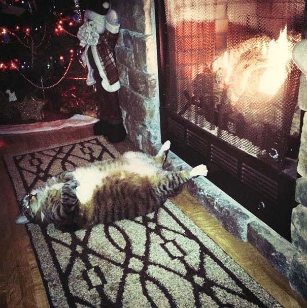 Γάτες που κοιμούνται στα πιο απίθανα μέρη (36)