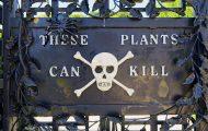 Ο πιο θανατηφόρος κήπος στον κόσμο