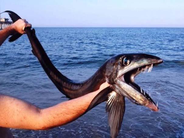 Όταν η ψαριά προκαλεί τρόμο (9)