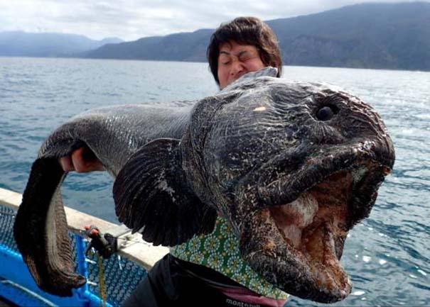Όταν η ψαριά προκαλεί τρόμο (11)