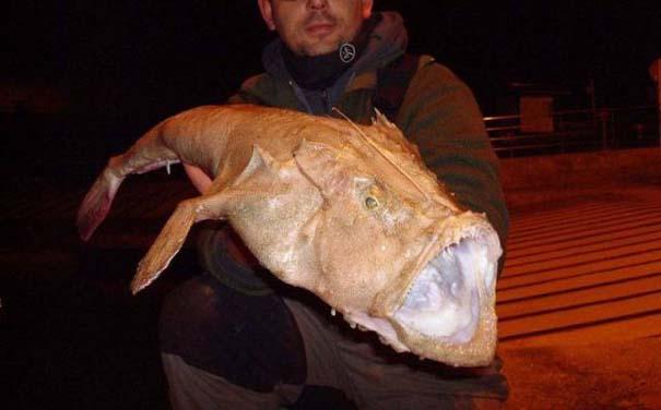 Όταν η ψαριά προκαλεί τρόμο (12)