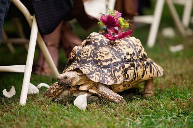 Παρανυφάκια που έκλεψαν την παράσταση σε γάμους (12)