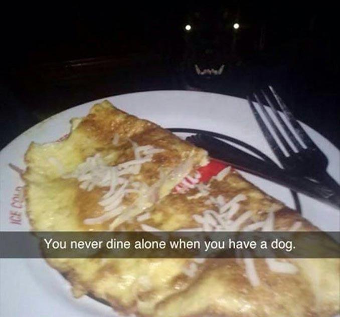 Ποτέ δεν τρως μόνος όταν έχεις σκύλο...   Φωτογραφία της ημέρας
