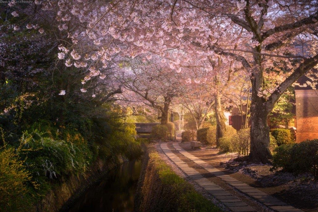 Το μονοπάτι των φιλοσόφων στο Κιότο της Ιαπωνίας | Φωτογραφία της ημέρας