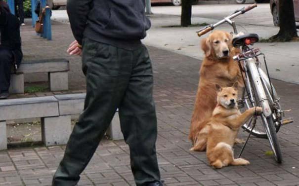 Προσοχή σε αυτούς τους σκύλους φύλακες (3)
